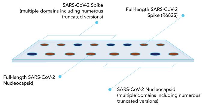 COV2-IMMUSAFE-COVID-micorarray