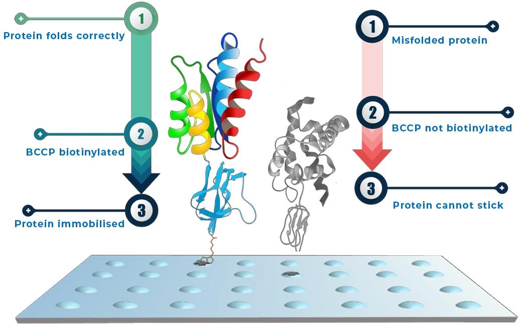 aicone-biochip-ace2